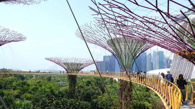 singapore supergroovetree